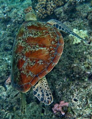 turtle-1582666_1920