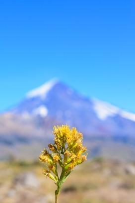 mountain-4410885_1920
